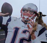 Patriots bring GOATs to practice to celebrate TB12 birthday